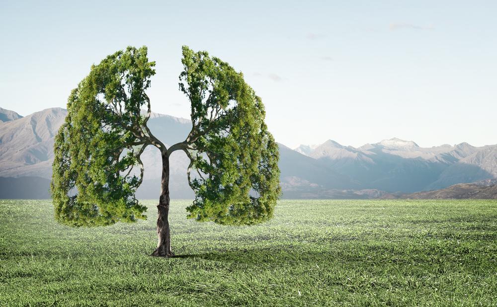 Énergie : l'importance de nos poumons